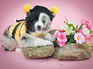 Bumble Bee Puppy