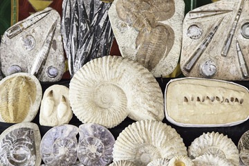 Fossils in an old market