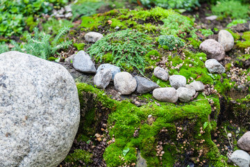 Stones and moss