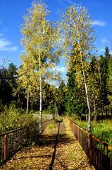 Autumnal nature,  path