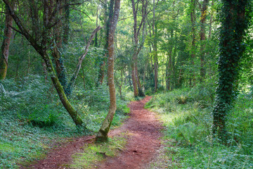 Cantabrian forest