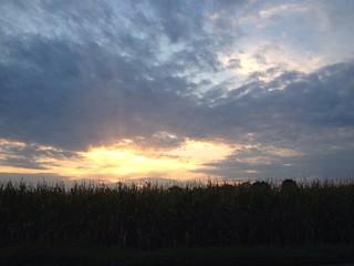tramonto sul mais