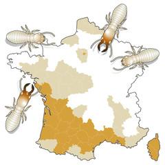 Diagnostic termites 2