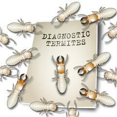 Diagnostic termites 3