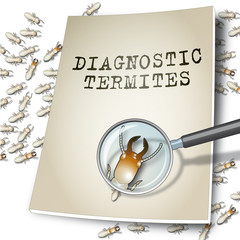 Diagnostic termites 4