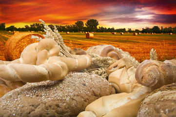 Various type of bread on the field background