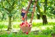Leinwanddruck Bild - Little girl in an apple garden