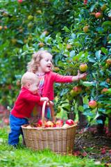 Happy little children in fruit garden eating apples
