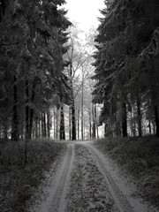 Weg durch einen Winterwald
