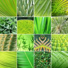 Collage - Grünpflanzen