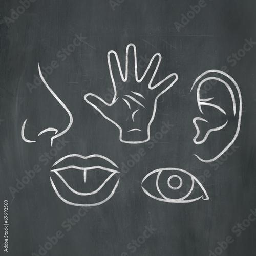 Chalk 5 Senses - 69692560