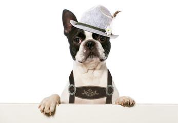 Hund am Volksfest