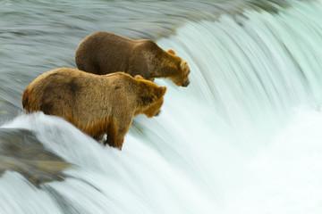 Zwei Braunbären warten auf Lachse
