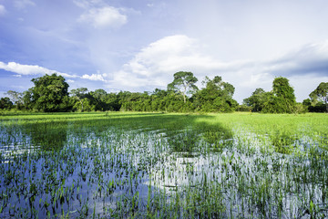 Wetland area in Pantanal, Brazil