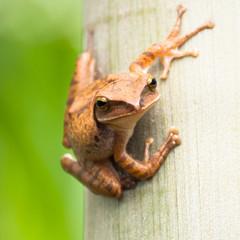 Frog resting at tree