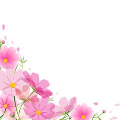秋桜  フレーム