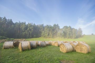 Bale siana ułożone na zamglonej łące pod lasem