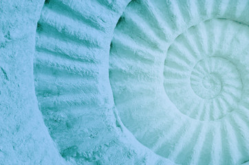 Color of ammonite prehistoric fossil.
