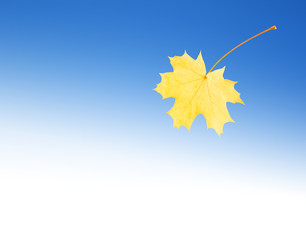 Autumn leaf in the blue sky