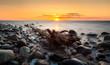 canvas print picture - Wyrwane drzewo na kamienistej ,morskiej plaży
