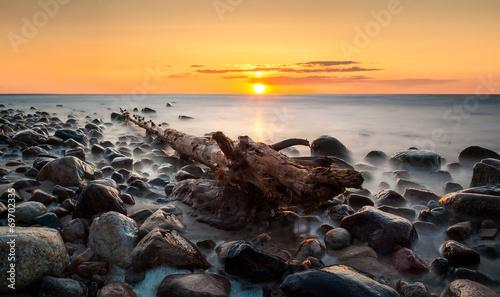 canvas print picture Wyrwane drzewo na kamienistej ,morskiej plaży