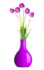 fresh purple tulips in vase isolated