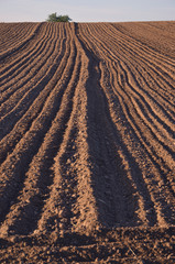 cultivated farm field agriculture landscape