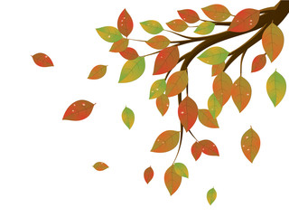 Fall Leaves on Branch