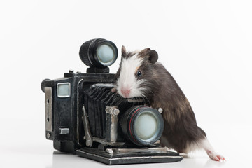 nice little hamster with retro photocamera.