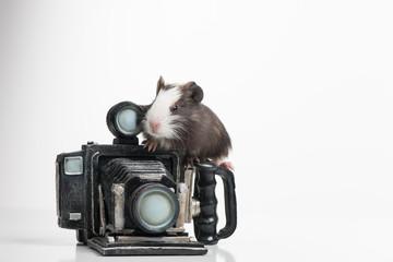 nice little hamster sitting on retro photocamera.