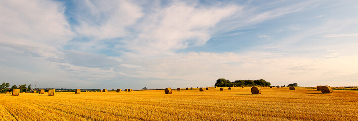 Panoramic field of corn with Mont Saint Michel ancient village i