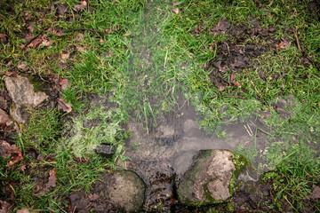 stream flowing through grass