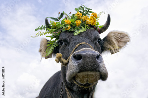 Cow queen with flower crown