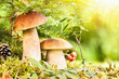 Wild mushrooms - 69712941