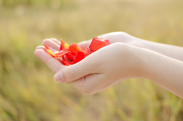 rose petals in palms