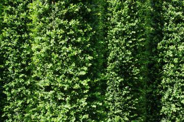 Hintergrund Zylinder aus Buchsbaum