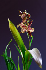 orchid with leaves