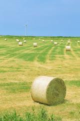 牧場と風力発電
