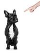 dog punished