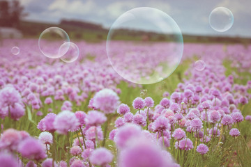 Flowering meadow and flying bubbles from bubble blower
