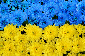 Blue and yellow stripes with colored flowers close-up (flag of U