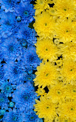 Blue and yellow stripes with colored flowers