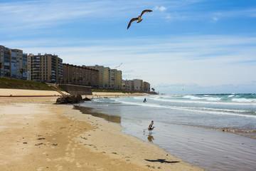 Seagulls at coast