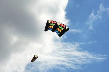 Mostly Black Kite