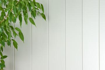 Täfelung mit Pflanze - Hintergrund