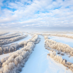 Forest in hoarfrost, top view