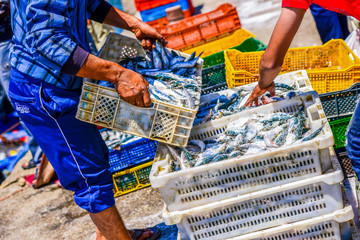 Fishermen arranging containers with fish