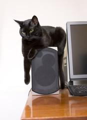 Black cute cat sitting on speaker and listening music