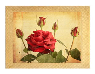 Old vintage card with a bouquet of beautiful pink roses on white