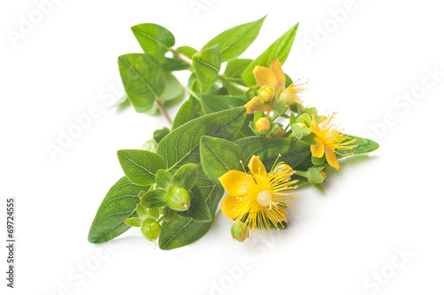 Foto op Canvas Kruiden St Johns wort isolated